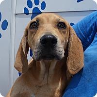 Adopt A Pet :: Oliver - Oviedo, FL