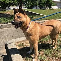 Adopt A Pet :: Poppy - Marietta, GA