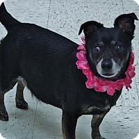 Adopt A Pet :: Mae - Chambersburg, PA