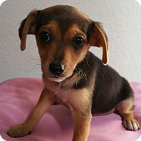 Adopt A Pet :: Lucy - Stockton, CA