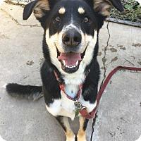 Adopt A Pet :: Lambchop - Hanna City, IL