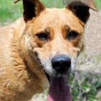 Adopt A Pet :: Regina - Wichita, KS