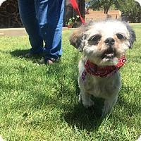Adopt A Pet :: *CHLOE* - Weatherford, TX