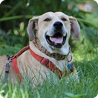 Adopt A Pet :: Oliver - Minneapolis, MN