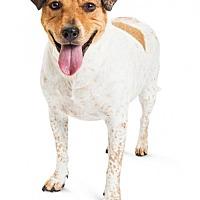 Adopt A Pet :: Ginny - Tempe, AZ