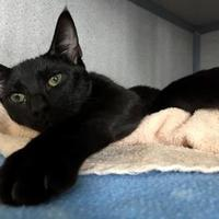 Adopt A Pet :: Min - Fort Collins, CO