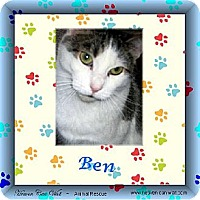 Domestic Shorthair Cat for adoption in Akron, Ohio - Ben