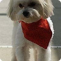 Adopt A Pet :: Gracie - CAPE CORAL, FL