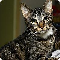 Adopt A Pet :: Katami - Lombard, IL