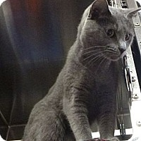 Adopt A Pet :: Sabrina - St. Petersburg, FL
