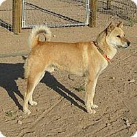Adopt A Pet :: Daibok - Southern California, CA
