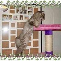Adopt A Pet :: Freddie - KANSAS, MO