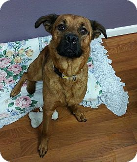 German Shepherd Dog Mix Dog for adoption in Lisbon, Ohio - Buffy