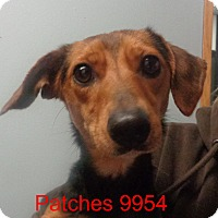 Adopt A Pet :: Patches - Greencastle, NC