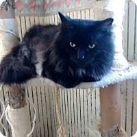 Adopt A Pet :: Big John - Saint Albans, WV