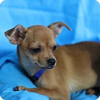 Adopt A Pet :: Sandy - Kempner, TX