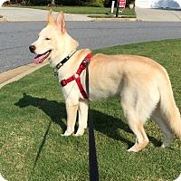 Adopt A Pet :: Deacon - Cumming, GA