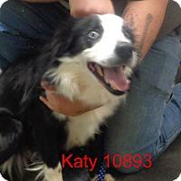 Adopt A Pet :: KaTIE - Greencastle, NC
