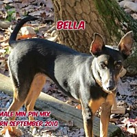 Miniature Pinscher Mix Dog for adoption in Huddleston, Virginia - Bella