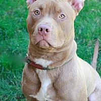 Adopt A Pet :: Junior - Brookhaven, NY