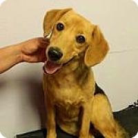 Adopt A Pet :: Luciana - ADOPTED - Livonia, MI