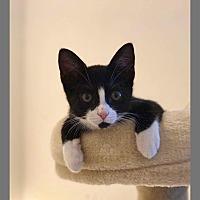 Adopt A Pet :: Janet - Hastings, FL