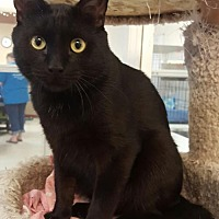 Adopt A Pet :: Stormy 2 - Pendleton, NY