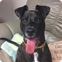 Adopt A Pet :: Dax - Valparaiso, IN