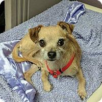 Adopt A Pet :: Mickey - Lisbon, OH