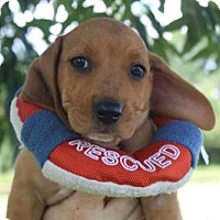 Adopt A Pet :: ADDIE - ADOPTION PENDING! - Pennsville, NJ