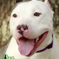 Bulldog Mix Dog for adoption in Savannah, Georgia - Ellie