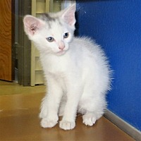 Adopt A Pet :: Greta - Indiana, PA