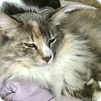 Adopt A Pet :: Melinda - Valley Stream, NY