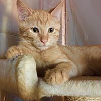 Adopt A Pet :: GinGin - Monroe, GA