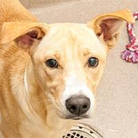 Adopt A Pet :: Cleo - Birmingham, AL