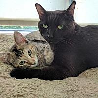 Adopt A Pet :: MacLaren - Chicago, IL
