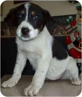 Terrier (Unknown Type, Medium)/Hound (Unknown Type) Mix Puppy for adoption in North Judson, Indiana - Deanna