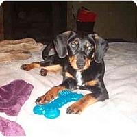Adopt A Pet :: Dash - North Jackson, OH