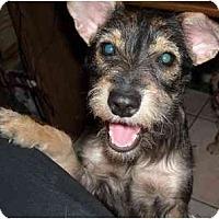 Adopt A Pet :: Sissy-Adopted - Mesa, AZ