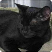 Adopt A Pet :: Zeek - Greenville, SC