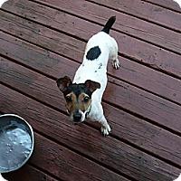 Adopt A Pet :: Val - Wisconsin Dells, WI