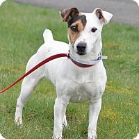 Adopt A Pet :: Lola - Tumwater, WA