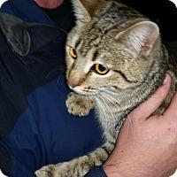 Adopt A Pet :: Sugar Sugar - McDonough, GA