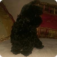 Adopt A Pet :: Corky - Antioch, IL