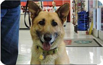 German Shepherd Dog Dog for adoption in Fort Worth, Texas - Max