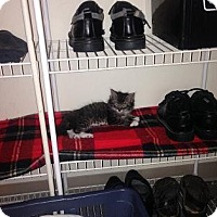 Adopt A Pet :: Willie - Kitten (50.00) - Rochester, NY