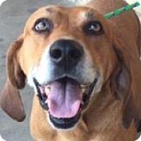 Adopt A Pet :: Boone - Canoga Park, CA