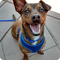 Adopt A Pet :: Woody - San Francisco, CA