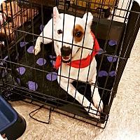 Adopt A Pet :: Camille - Odessa, TX