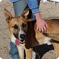 Shepherd (Unknown Type) Dog for adoption in Yucca Valley, California - Tommy Martin McFly